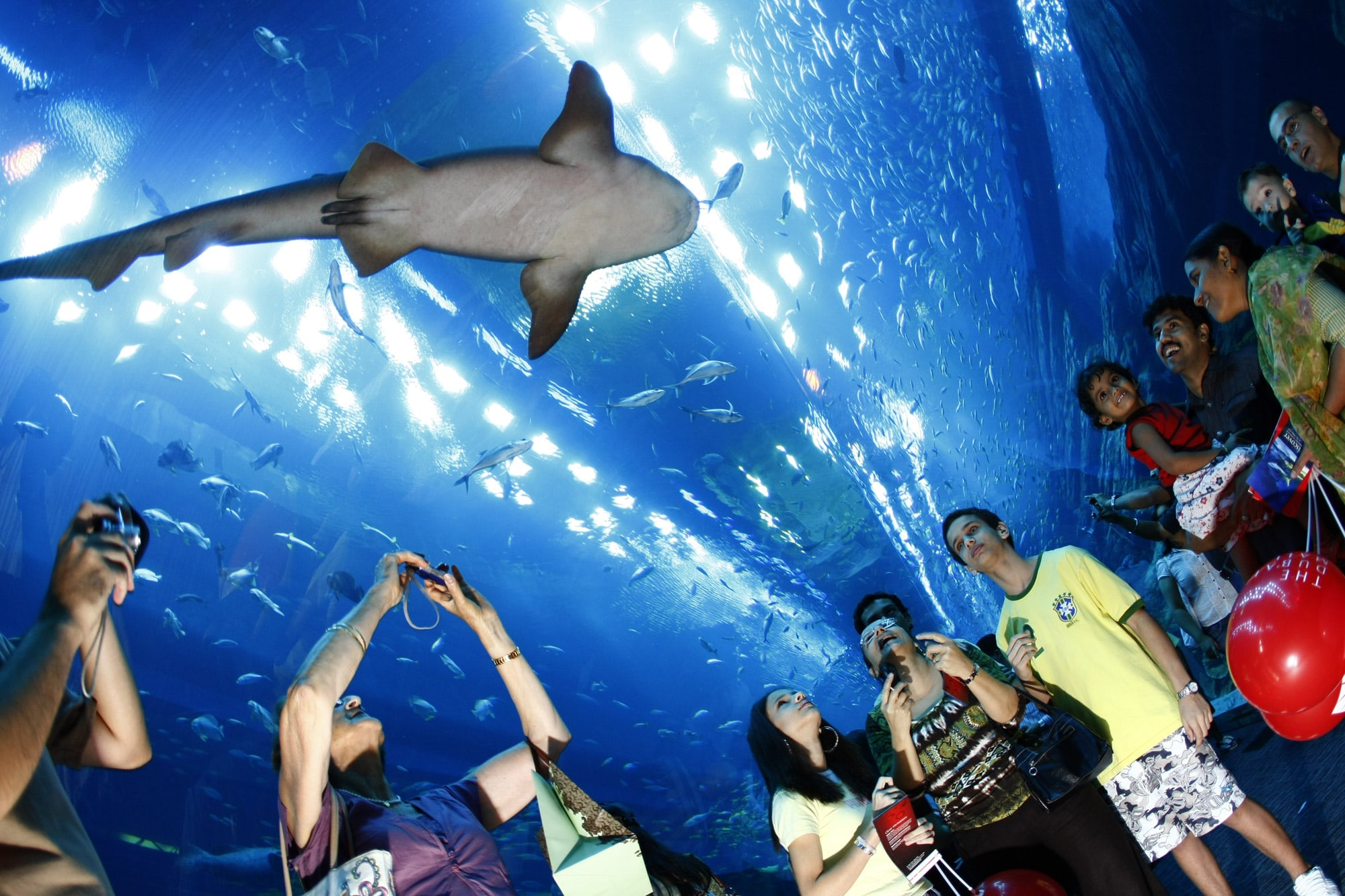 Fish aquarium in jeddah - Seyexclusive Com